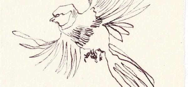 Tagebucheintrag 19.12.2020, Meisenflug, 20 x 15 cm, Tinte und Aquarell auf Silberburg Büttenpapier, Zeichnung von Susanne Haun (c) VG Bild-Kunst, Bonn 2020