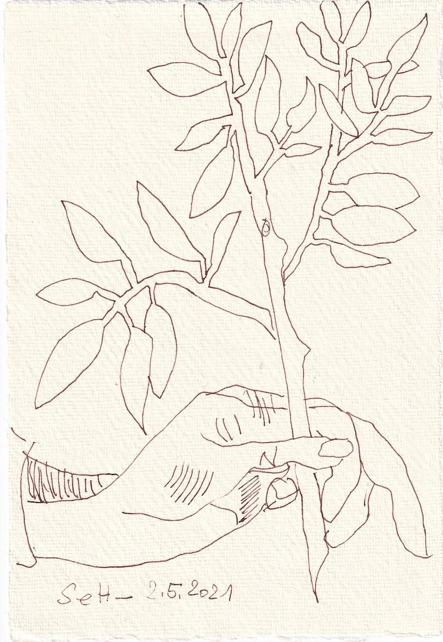 Tagebucheintrag 02.05.2021, Judith trägt den Olivenzweig, V1, 20 x 15 cm, Tinte und Buntstift auf Silberburg Büttenpapier, Zeichnung von Susanne Haun (c) VG Bild-Kunst, Bonn 2021