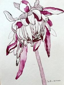 Dahlie, Version 3, 32 x 24 cm, Tusche auf Aquarellkarton, Zeichnung von Susanne Haun (c) VG Bild-Kunst, Bonn 2021