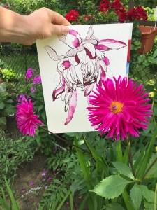 Präsentation Dahlie, Version 3, 32 x 24 cm, Tusche auf Aquarellkarton, Zeichnung von Susanne Haun (c) VG Bild-Kunst, Bonn 2021