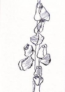 Rittersporn, Version 3, 17 x 12 cm, Tusche auf Aquarellkarton, Zeichnung von Susanne Haun (c) VG Bild-Kunst, Bonn 2021