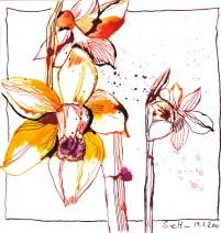 Narzissen - Zeichnung von Susanne Haun - 20 x 20 cm - Tusche auf Bütten