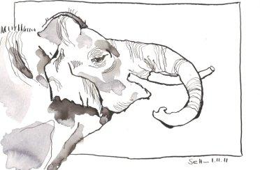 Elefantenbulle, Kopf - Zeichnung von Susanne Haun - Tusche auf Bütten - 17 x 22 cm