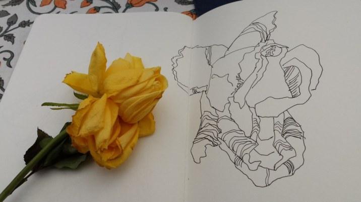 Rosen zeichnen (c) Foto von Susanne Haun