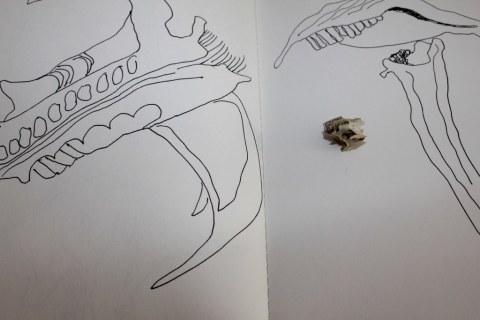 Knochenspiele (c) Foto von Susanne Haun