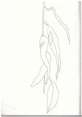 2 Trauerweide (c) Zeichnung von Susanne Haun