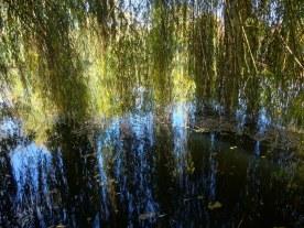 4 Trauerweide am Schäfersee (c) Foto von Susanne Haun