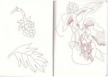 Blaubeeren und Frauenschuh - Berchtesgadener Land (c) Zeichnung von Susanne Haun