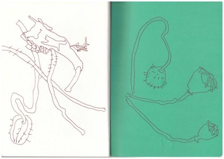 Teile aus meiner Wunderkiste aus der in der Mark Brandenburg, Neuroddahn (c) Zeichnung von Susanne Haun