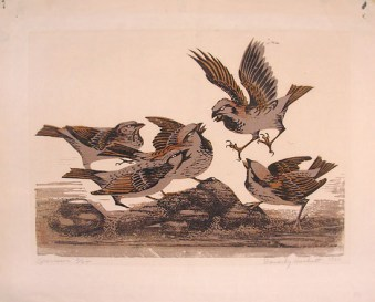 Hackett   Sparrows