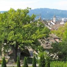 Garden with a view of Zurich