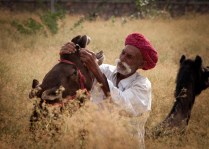 The Pushcar Camel Fair is an ideal place for photography enthusiasts