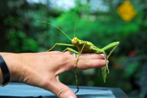 Large insect on human hand