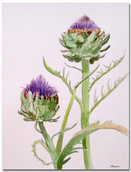 Artichoke in Flower by Susan Sternau