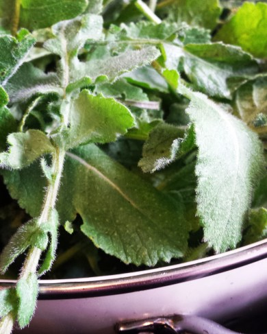 Wild brassica leaves