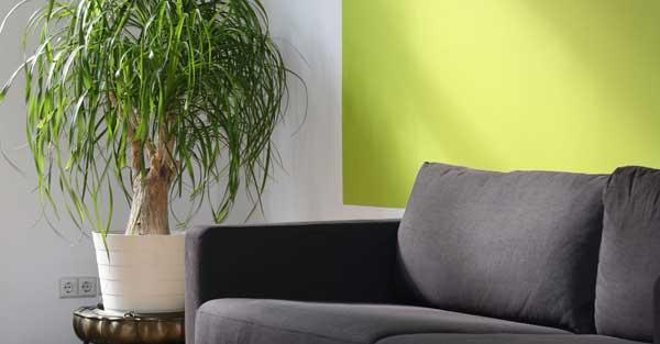 house-plants-port-elgin-real-estate