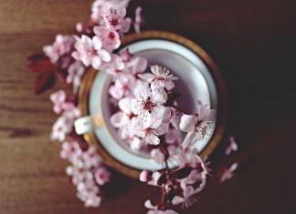 tè e fiori di primavera