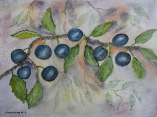 Sloes I