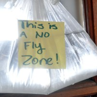 The Plastic Bag of Water Really Does Keep Flies Away