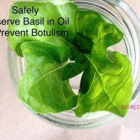 The Safe Way to Preserve Basil In Oil Without Botulism