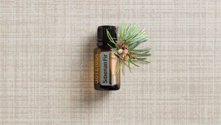 Siberian Fir is Great For Health!