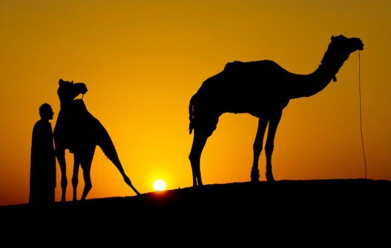 Rajasthan con Diwali e Pushkar 2017, cammelli al tramonto