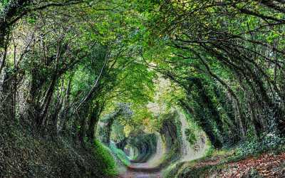 The path to Halnaker Windmill, a magical tunnel of trees