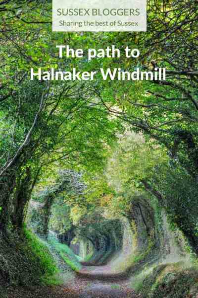 A magical tunnel of trees that's the path to Halnaker Windmill in West Sussex, England