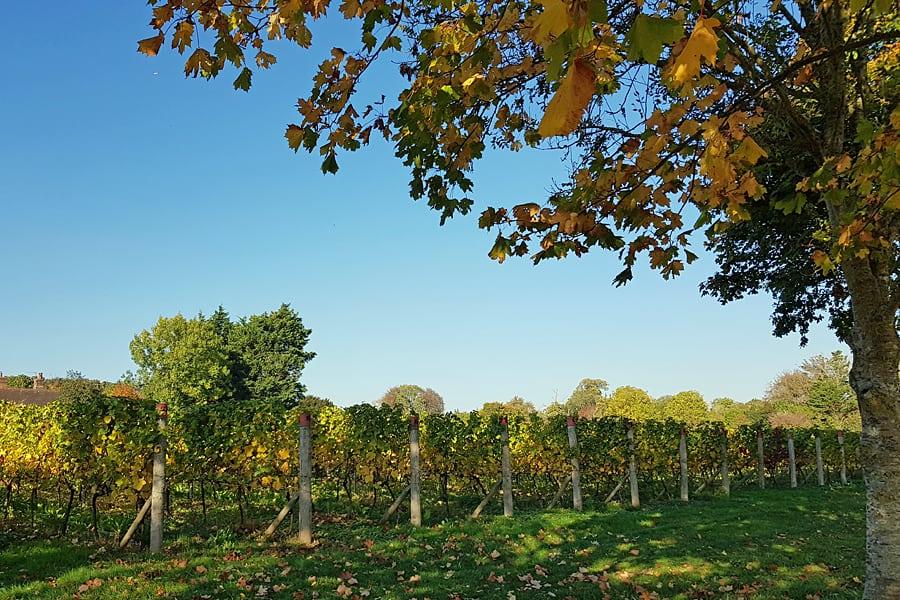 Tinwood Estate vineayrds, Halnaker, West Sussex