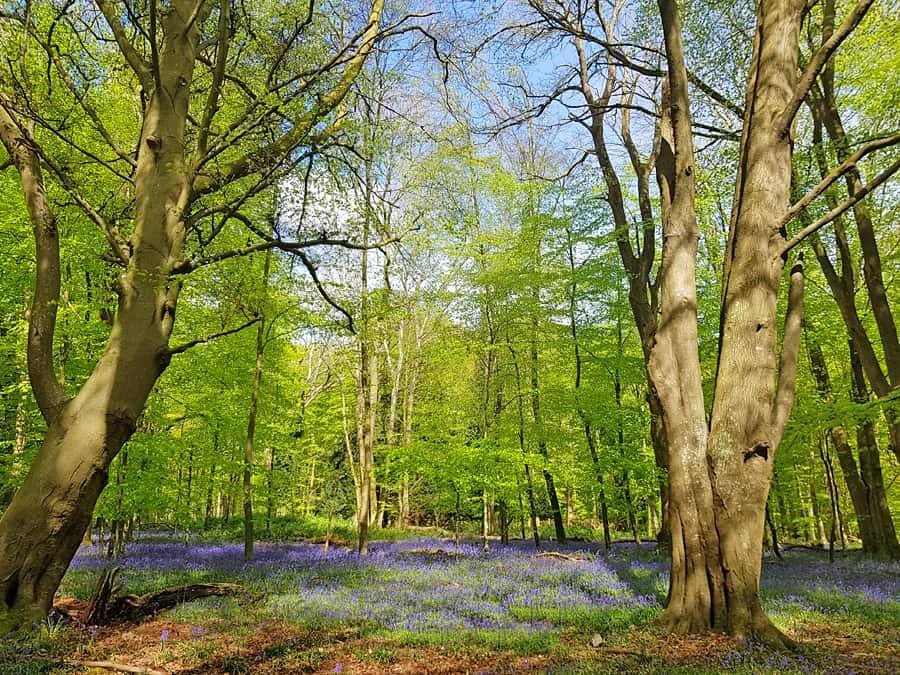 Woodland walks in West Sussex | Nore Wood