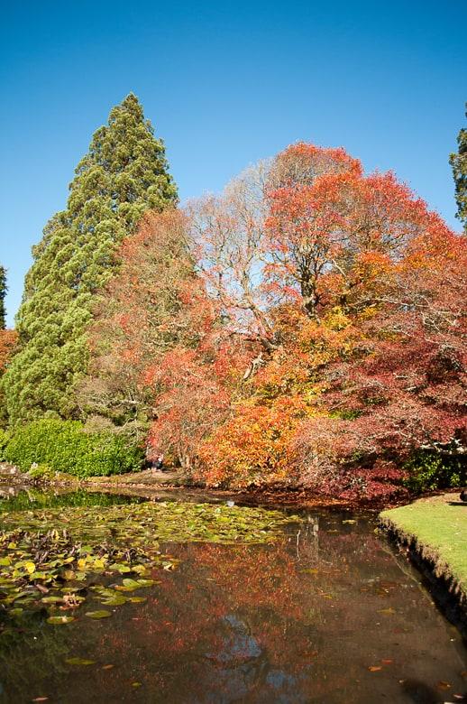 Nyssa at Sheffield Park Gardens