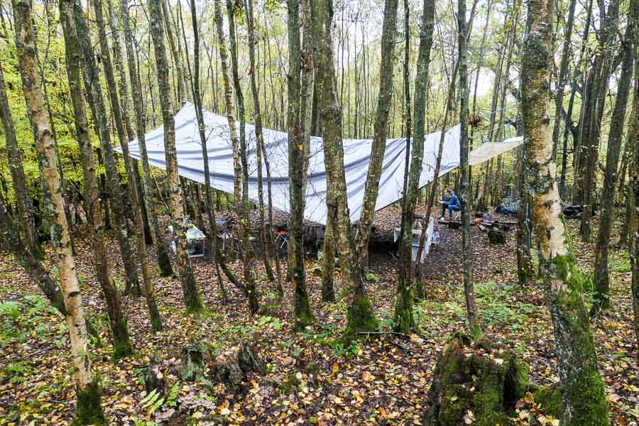 Foraging Base Camp