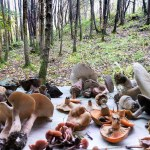A fungi foraging course in Sussex with Geoff Dann