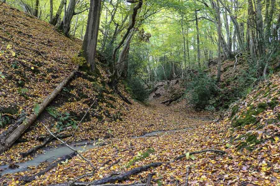Sussex Woodland in Autumn