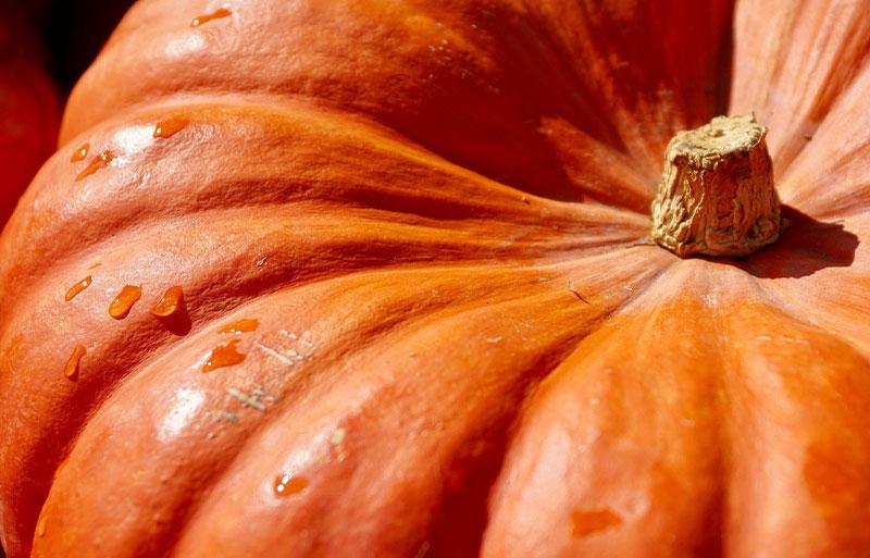 Sussex PYO pumpkins
