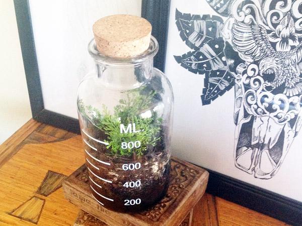 Terrarium_planted