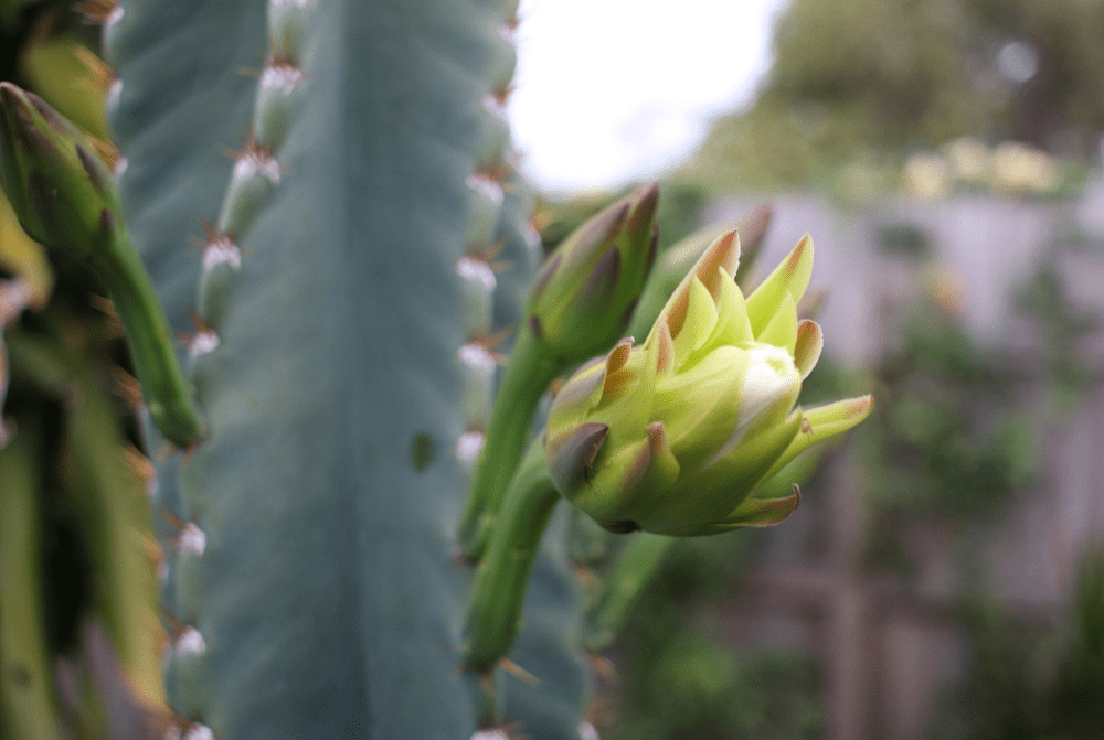 Dealing With Prickly People