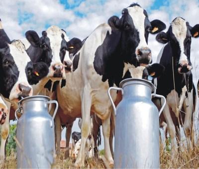 Organic Milk Importance - Telugu Agriculture News