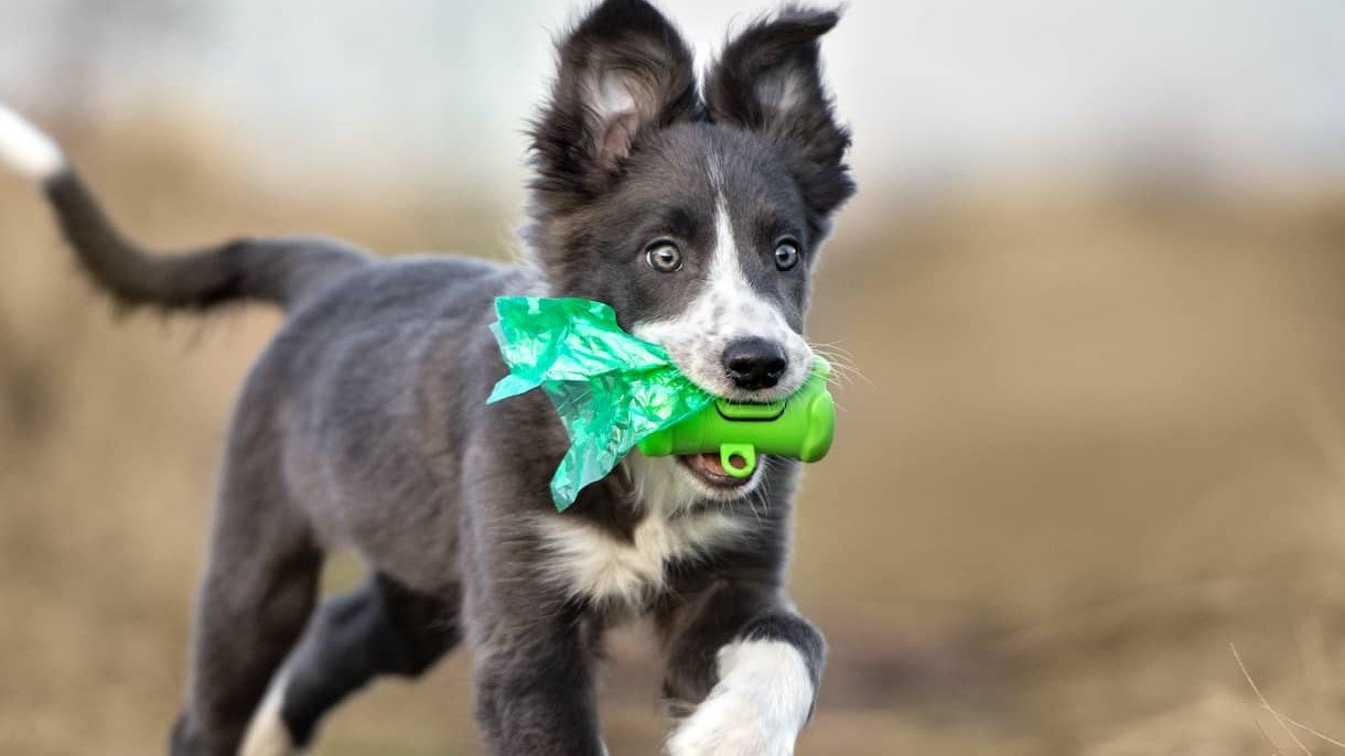 The 6 Best Biodegradable Dog Poop Bags With Handles