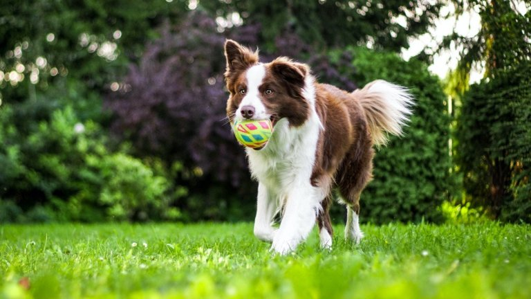 How to Reduce Your Dog's Carbon Footprint