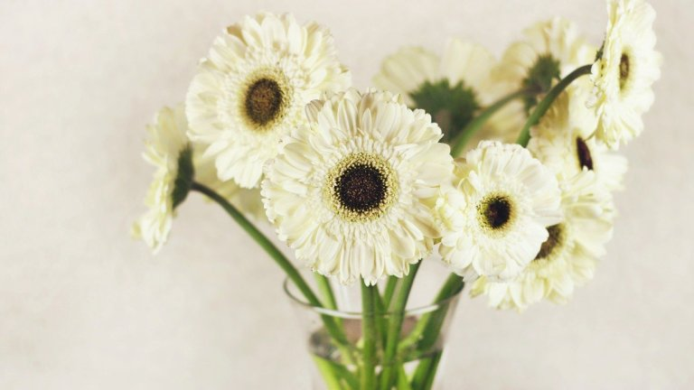 Can Cut Flowers Be Composted?