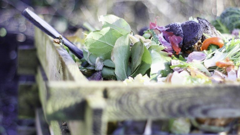 Which Plants Should Not Be Composted?