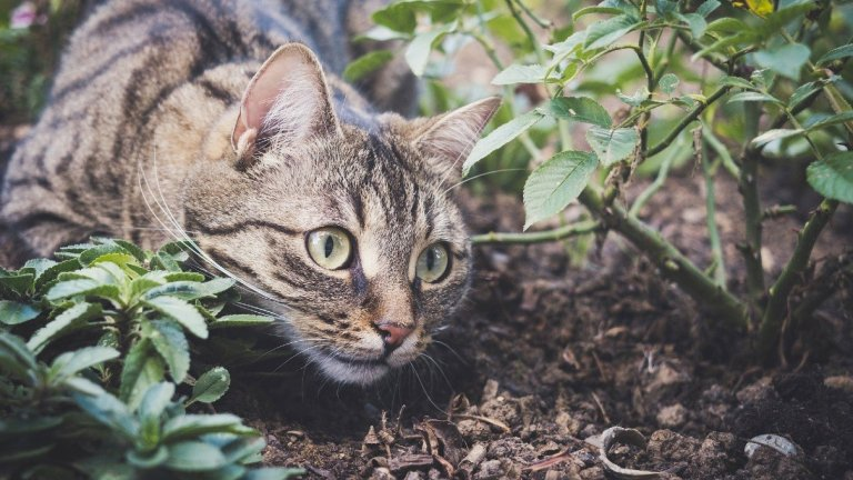 How Long Does Cat Litter Take To Decompose?
