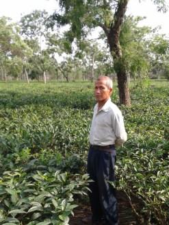 Umeshwar Phukan at his tea-farm