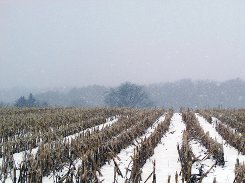 field covered with snow and corn stubble