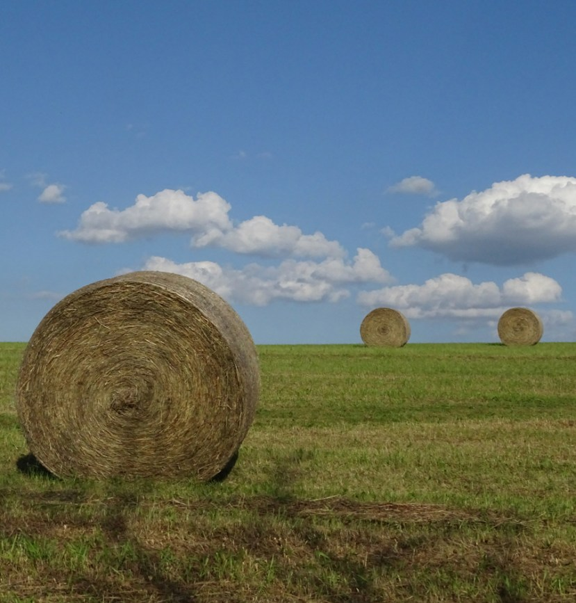 Three round bales of hay on green grass with blue sky