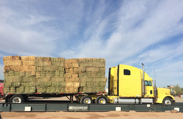 Yellow truck with rectangular bundles of hay loaded on top.