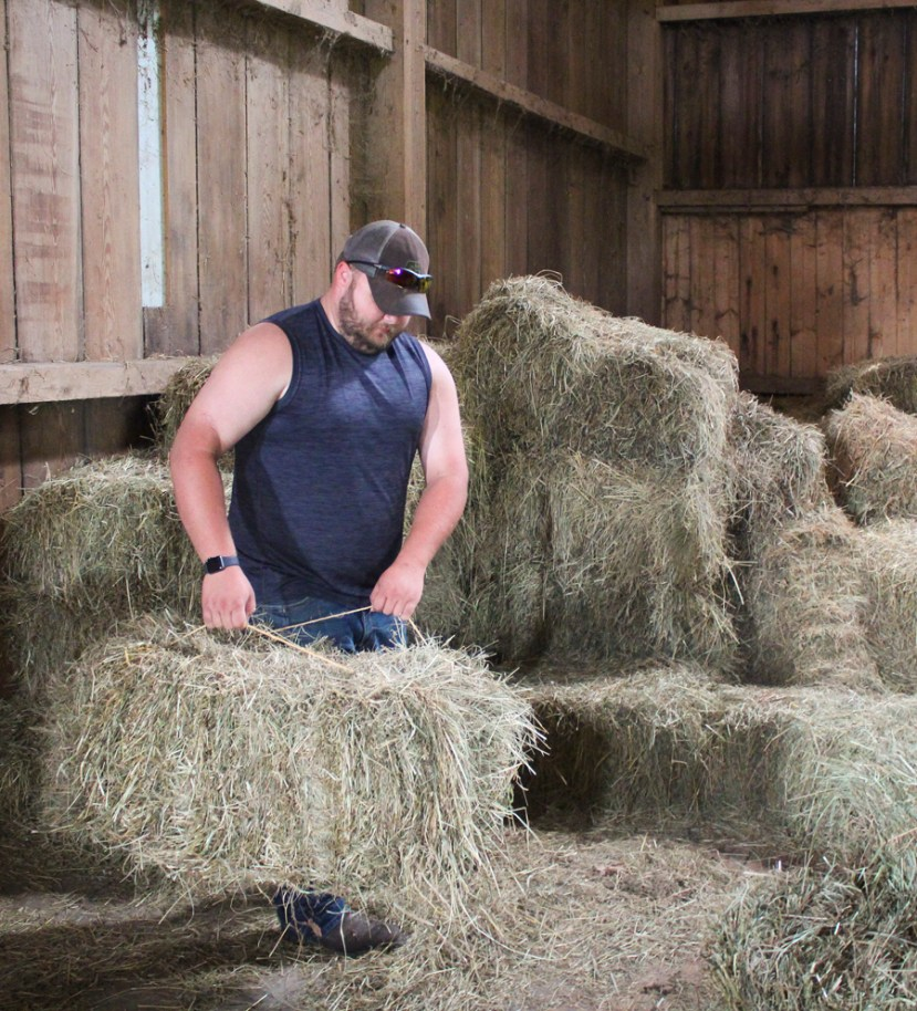 Man in barn lifting a square bale; many square bales behind him