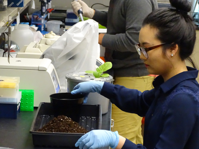 woman in lab mixing silicon salts into soil