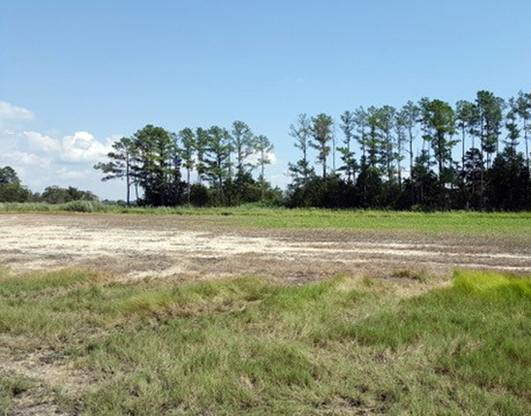 In front, long grass, middle of photo bare sandy soil, back is a green weed, then trees